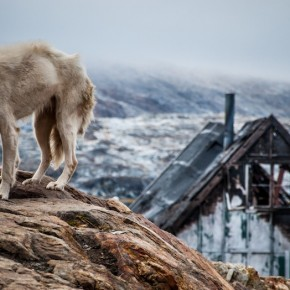 La pasion secreta de Fjordur, Jørn Riel, Reseña VIII