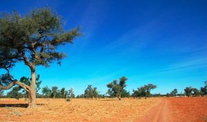 Paisaje de a sabana del Sahel.