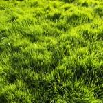 Normandía, nuestro querido desierto verde