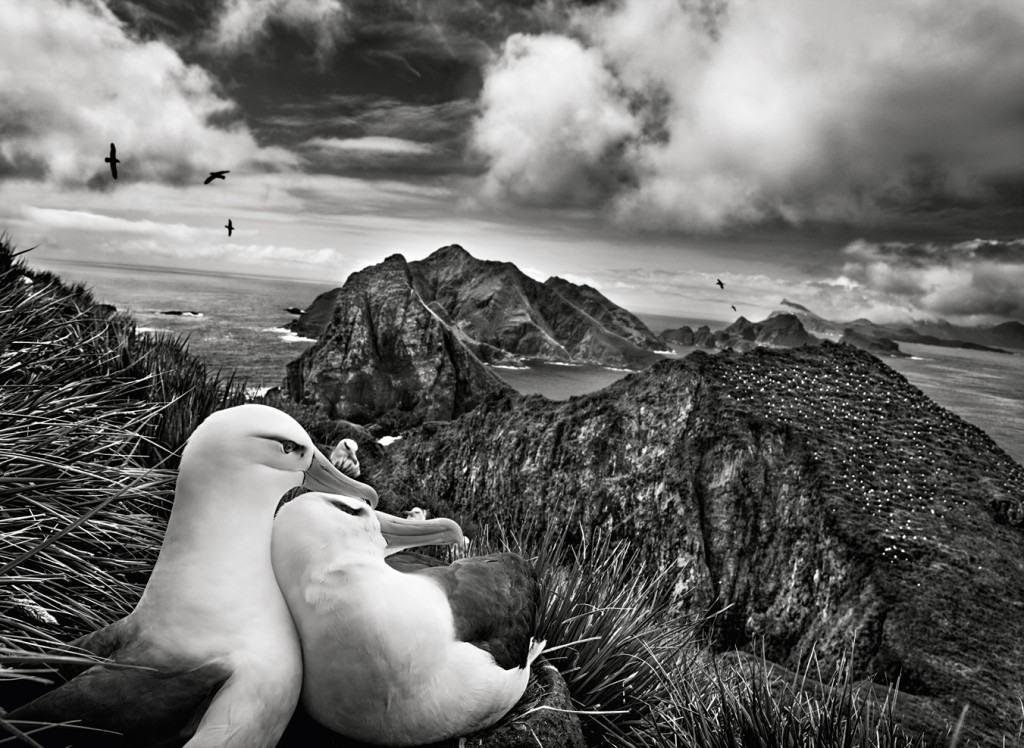 Amor humano fuera de la humanidad. ¿qué están pensando?Fotografía de Sebastião Salgado.